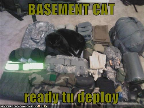 BASEMENT CAT    ready tu deploy