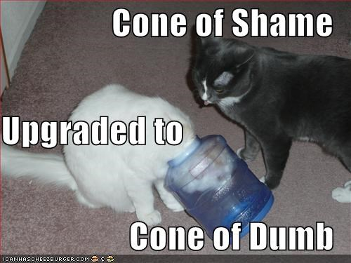 caption,captioned,cat,Cats,cone of dumb,cone of shame,dumb,shame,upgrade,water cooler