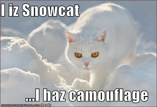 camouflage,caption,captioned,cat,i haz it,prowling,snow,snowcat,winter
