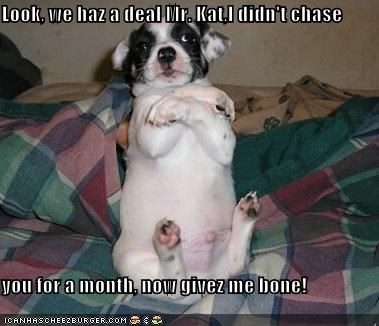 Look, we haz a deal Mr. Kat,I didn't chase  you for a month, now givez me bone!