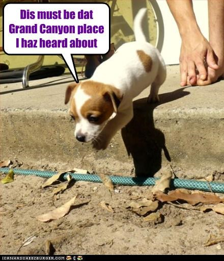 caution,grand canyon,heard about,jack russell terrier,perspective,puppy,realization,seeing it,stepping,witnessing
