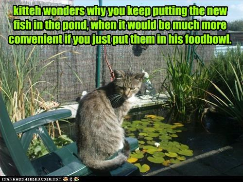 kitteh wonders why you keep putting the new  fish in the pond, when it would be much more convenient if you just put them in his foodbowl.