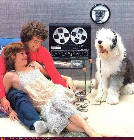 cool,dogs,headphones,Music,tape player,vintage,wtf