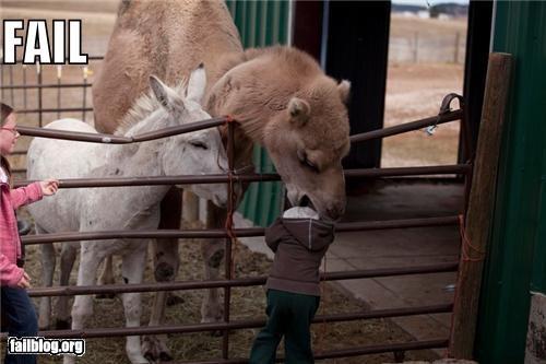 Petting Zoo FAIL