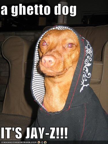 a ghetto dog  IT'S JAY-Z!!!