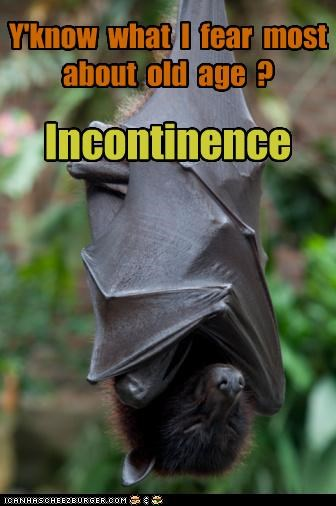 even bats have fears
