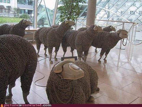 art,phones,puns,sheep,wtf