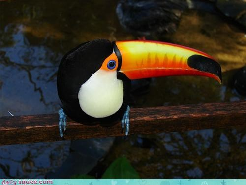 bird,color,toucan