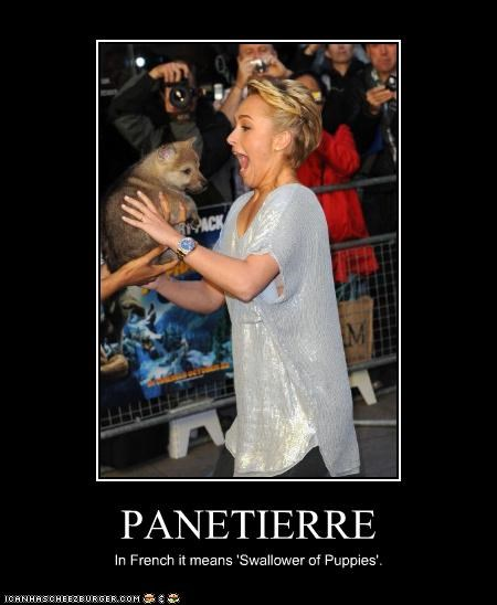 actress,dogs,french,Hayden Panettiere,lolz,puppies