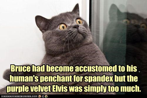 Bruce had become accustomed to his human's penchant for spandex but the  purple velvet Elvis was simply too much.