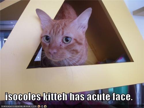 acute,caption,captioned,cat,cute,face,Hall of Fame,isosceles,kitteh,pun,triangle