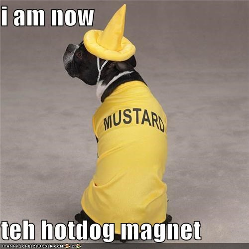 boxer,costume,dressed up,hotdog,magnet,mixed breed,mustard,transformation