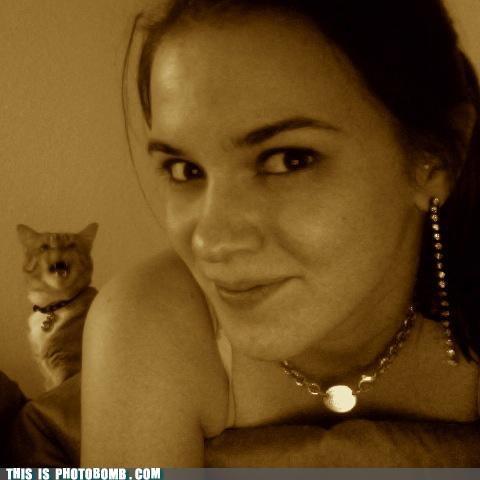 Animal Bomb,babe,Cats,Caturday,fierce,filter,photobomb,sepia