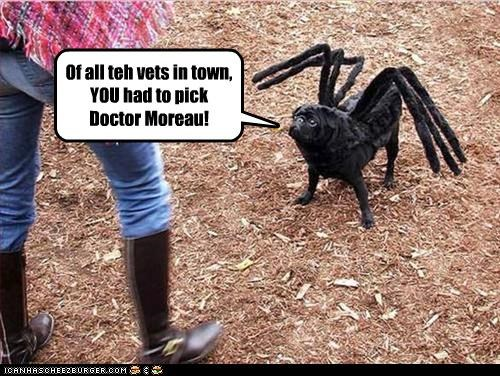 choice,costume,dr-moreau,pug,spider,town,upset,vets,why