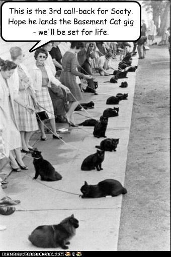 animals,basement cat,Cats,funny,meme,pets,Photo,photograph,wtf