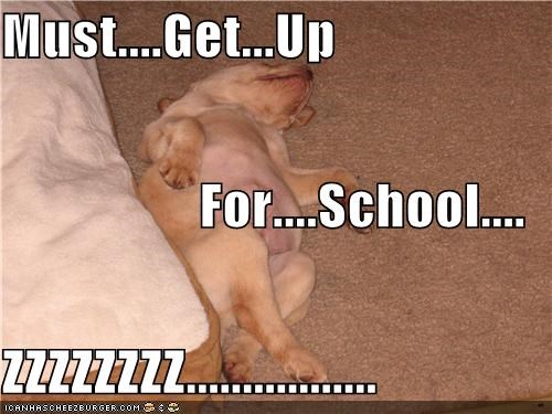 Must....Get...Up For....School.... ZZZZZZZZ.................