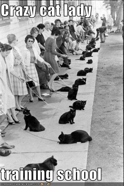 Crazy cat lady  training school