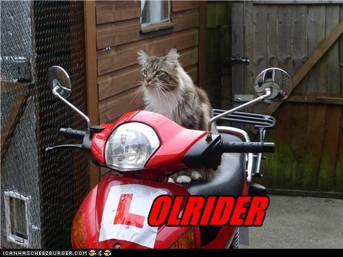 Lolrider
