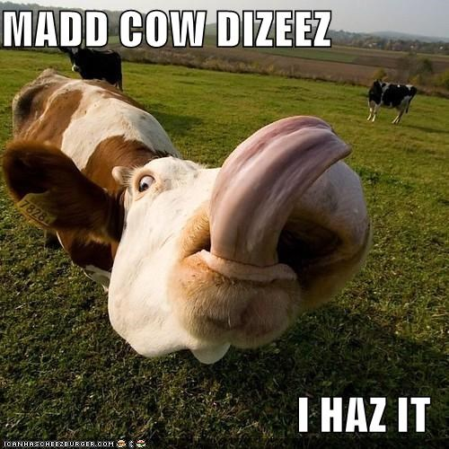 MADD COW DIZEEZ  I HAZ IT