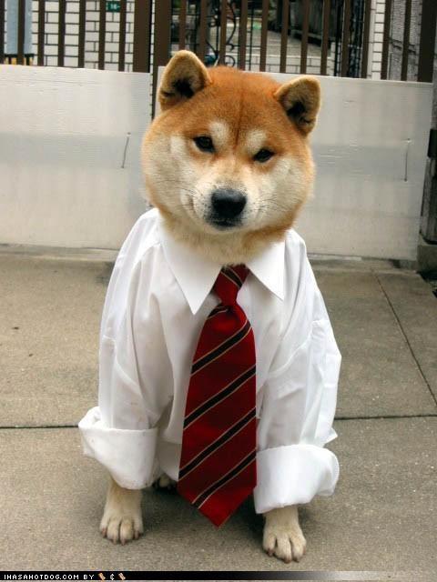 bring it on,dress shirt,dressed up,monday,optimism,shiba inu,tie