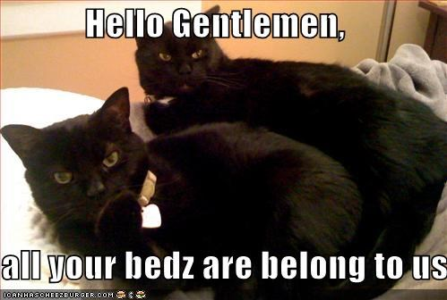 Hello Gentlemen,  all your bedz are belong to us
