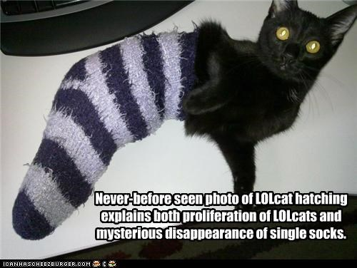 Never-before seen photo of LOLcat hatching explains both proliferation of LOLcats and mysterious disappearance of single socks.