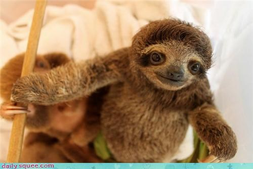 Sloth can has hug?