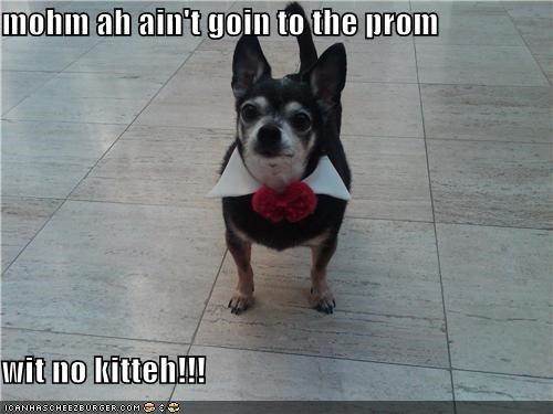 mohm ah ain't goin to the prom  wit no kitteh!!!