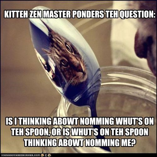 caption,captioned,cat,deep thoughts,koan,pondering,question,riddle,spoon,tabby,zen,zen master