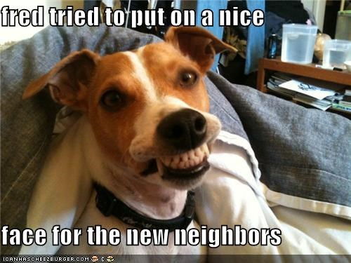 attempt,face,FAIL,greetings,hello,introductions,jack russell terrier,new neighbors,nice,smile,snarl,trying