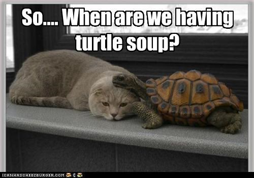 So.... When are we having turtle soup?