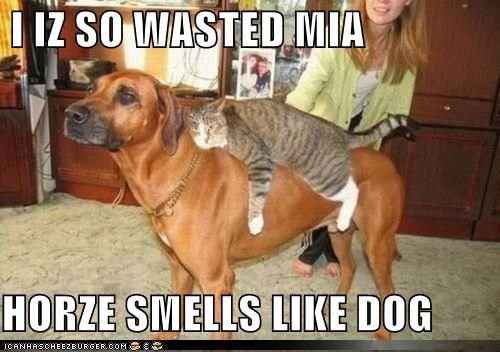 I IZ SO WASTED MIA  HORZE SMELLS LIKE DOG