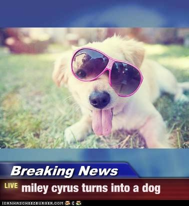 Breaking News - miley cyrus turns into a dog