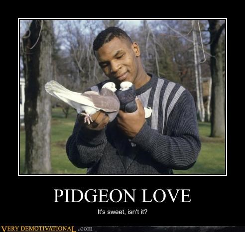 PIDGEON LOVE