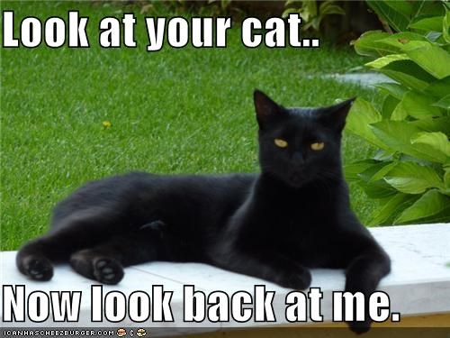 Look at your cat..  Now look back at me.