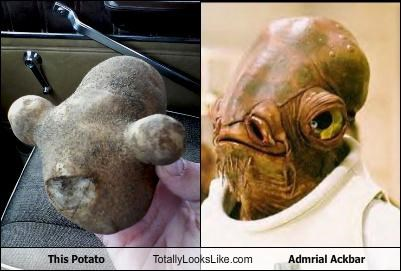 This Potato Totally Looks Like Admrial Ackbar