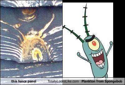 cartoons,fence,nickelodeon,plankton,SpongeBob SquarePants,wood