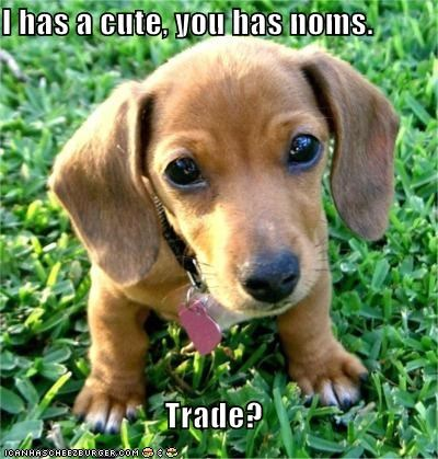 I has a cute, you has noms.  Trade?