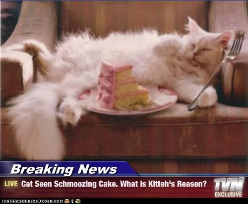 Breaking News - Cat Seen Schmoozing Cake. What is Kitteh's Reason?
