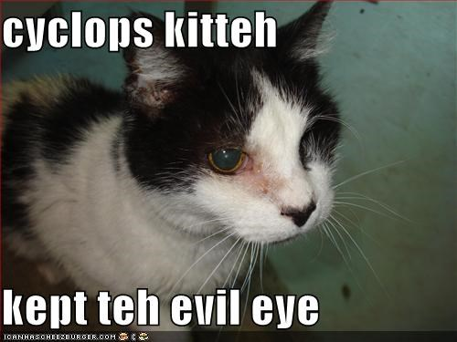 cyclops kitteh  kept teh evil eye