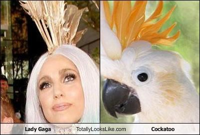 Lady Gaga Totally Looks Like Cockatoo