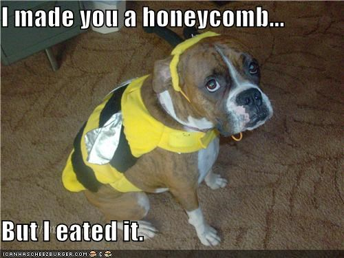 bee,boxer,costume,dress up,eated it,halloween costume,honeycomb,i eated it,sowwy