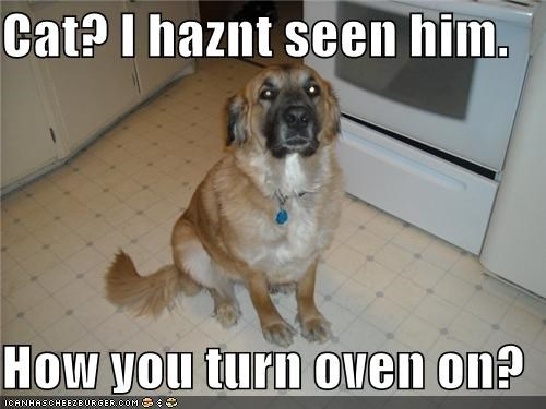 Cat? I haznt seen him.  How you turn oven on?