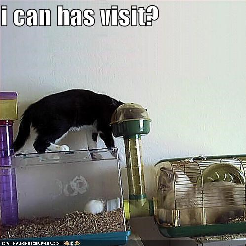 i can has visit?