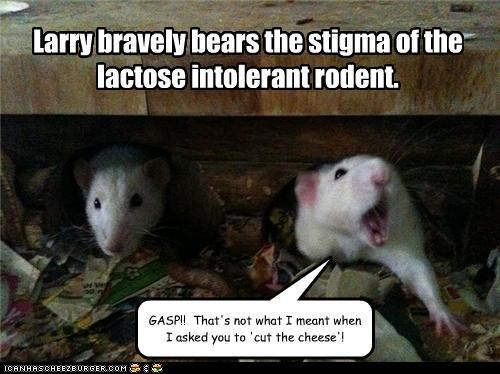 Lactose Intolerant Rodent