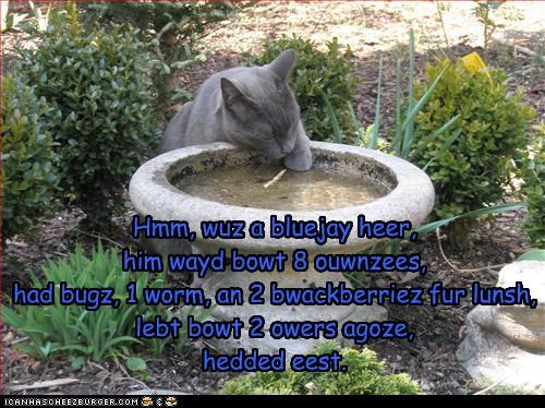 bird,bird bath,bluejay,caption,captioned,cat,facts,information,kitteh,tracker,tracking
