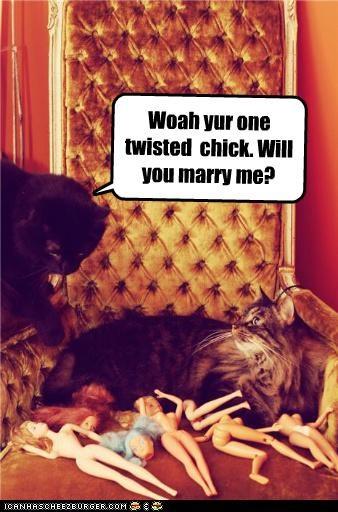 Basement cat finds his ideal partner
