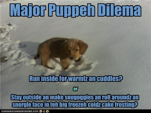 choices,cuddles,decision,dilemma,either,or,playing,puppy,snow,two,warm,whatbreed