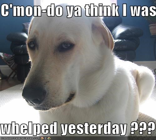 C'mon-do ya think I was  whelped yesterday ???