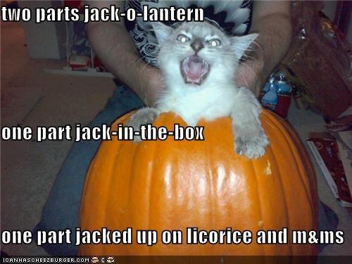 alliteration,caption,captioned,cat,energy,halloween,jack in the box,jack o lanterns,jacked up,licorice,mms,meowloween,parts